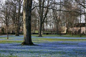 schlossgarten scilla 300x200 - Schlossgarten
