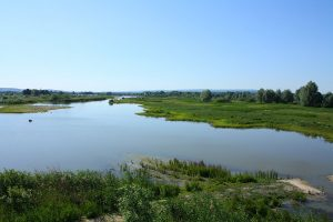seenland altmuehlsee vogelinsel c lbv c pbria.jpg 300x200 - Fränkisches Seenland